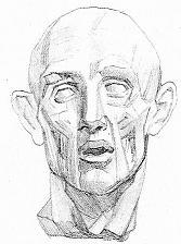 Тоновой рисунок экорше головы человека Часть 1