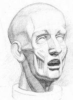 Тоновой рисунок экорше головы человека Часть 2